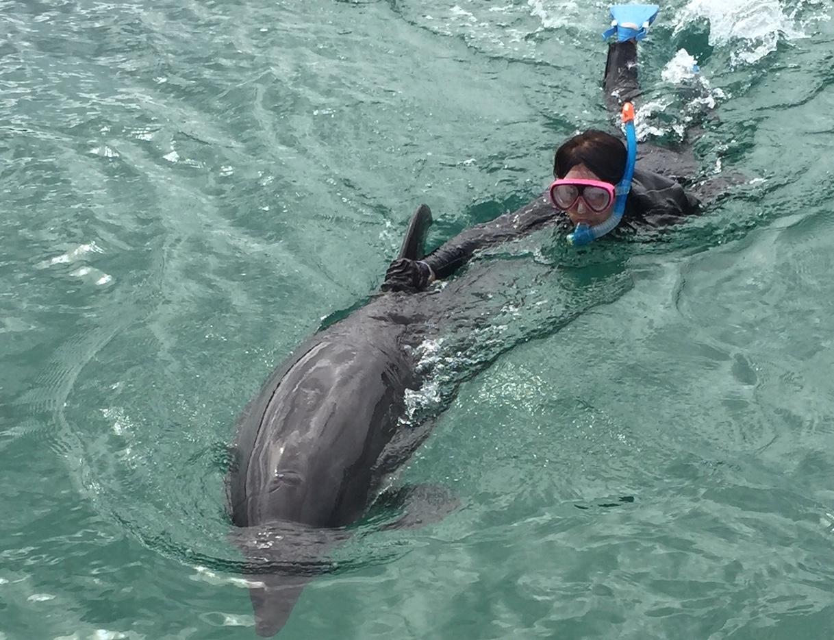 小野さん石垣島での取材風景でイルカと泳いでいる様子